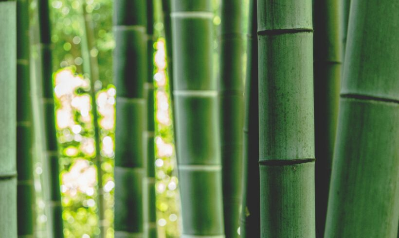 Top 10 Amazing Bamboo Products For Under £30