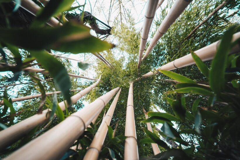 How Eco-friendly Is Bamboo? The Ultimate Bamboo FAQ